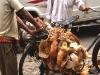 Chickens Kolkata, India